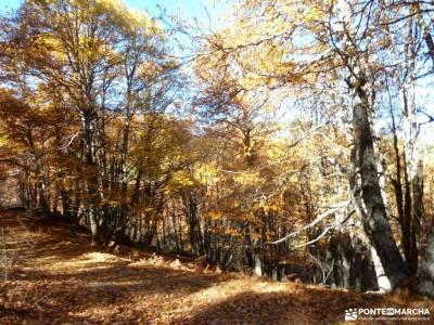 Castañar de El Tiemblo;Ávila; club montañismo madrid senderismo por madrid fotos de la pedriza pa